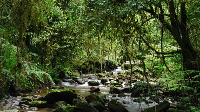 I Ranomafana nationalpark görs en guidad vandring.